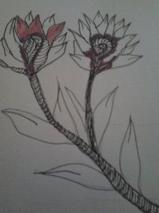 CROSS HATCHING DRAWING PLANTS 2015